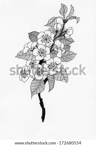 Flowering cherry branch in watercolor  - stock photo