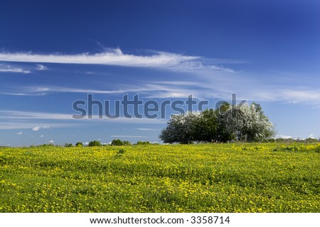 Flowering  dandelions and apple trees - stock photo