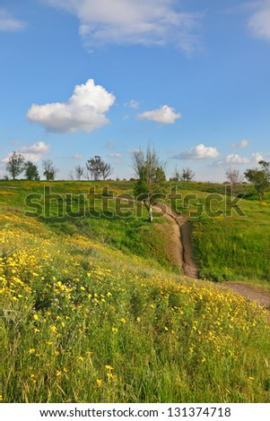 Flowering fields and the bright blue sky. A lovely spring day in southern Israel