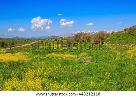 Flowering Golan Heights in a beautiful sunny day. On the horizon is visible snowy peak of Mount Hermon - stock photo