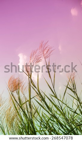 flowering grass and sky