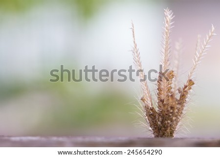 Flowering grass background on wood
