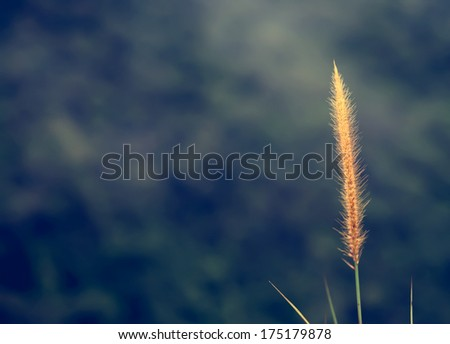 Flowering grass background, vintage style - stock photo