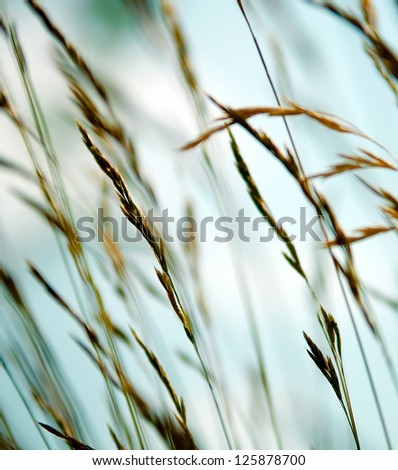 Flowering grass bending in the wind. - stock photo