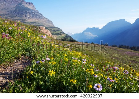 Flowering grasses on the mountainside in Glacier National Park in the early morning, Montana, USA