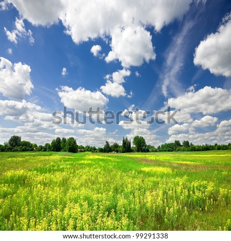 Flowering meadow and blue sky - stock photo