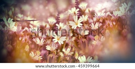Flowering meadow - beautiful white meadow flowers