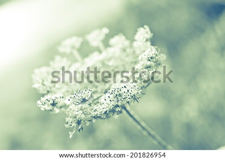 Flowering Meadow , shallow focus - stock photo