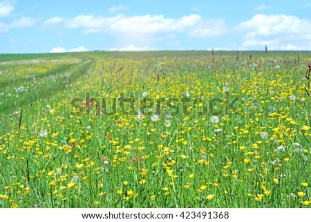flowering meadow with buttercups