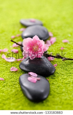 flowering pink quince blossom with row of stones green towel