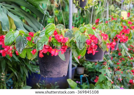 flowering plant in the garden - stock photo