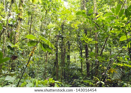 Rainforest Plants Stock Images, Royalty-Free Images ...
