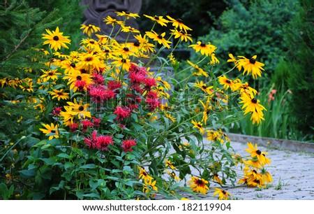 Flowering Rudbeckia and Monarda didyma - stock photo