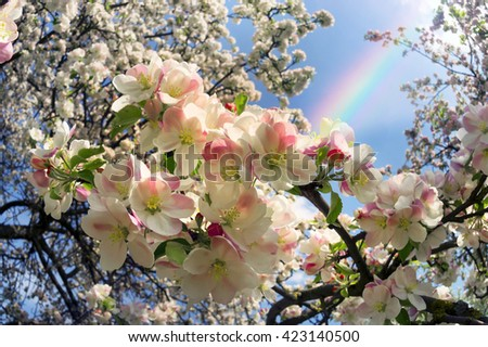 Flowering shrub decorative apple tree with petals and a delicate aroma - a symbol of a new crop of spring victory vitality of nature clean environment of the Earth the farmer joy