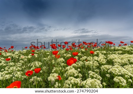 flowering spring field - stock photo