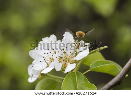 flowering tree and flying bee