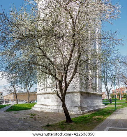Flowering tree growing near the ancient tower - Venice, Italy - stock photo