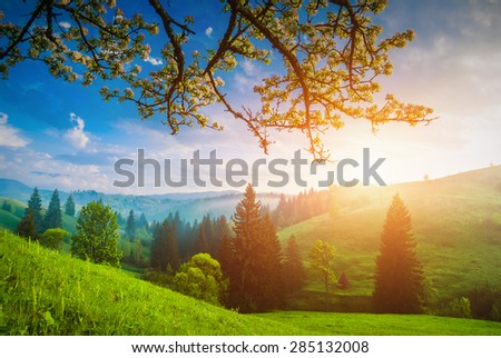 Flowering wild apple tree on a green hill in a Carpathian mountains. Majestic sunrise. Spring time - stock photo
