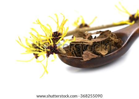 flowering witch hazel (Hamamelis) and a wooden spoon with dried leaves for  homemade herbal cosmetics, isolated with shadow on a white background, close up with selected focus, narrow depth of field - stock photo