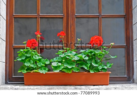flowerpot of flowers standing on a windowsill - stock photo