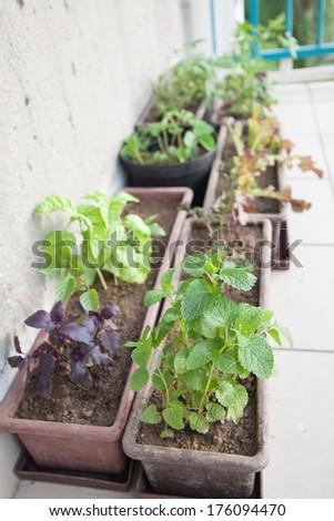 Flowerpots with herbs on a balcony. Shallow dof - stock photo