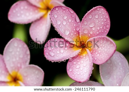 Flowers after the rain always find beauty more. - stock photo