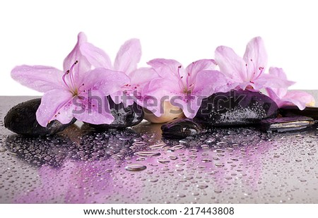 flowers and black stones with reflection  - stock photo