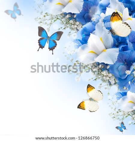 Flowers and butterfly, blue hydrangeas and white irises - stock photo