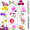 Flowers and garden collage on isolated white - stock photo