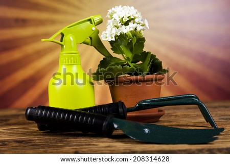 Flowers and garden tools