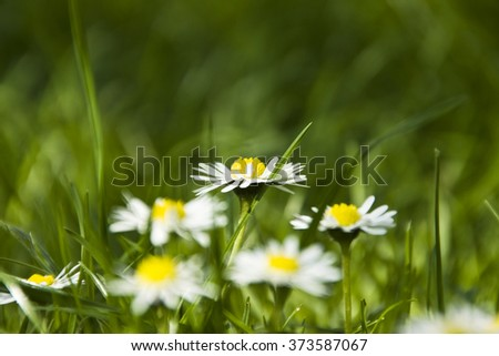 flowers and green grass background