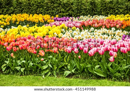 Flowers and green meadow, tulip field