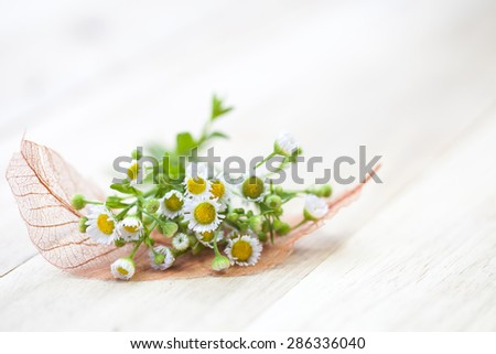 Flowers and leaf on soft background