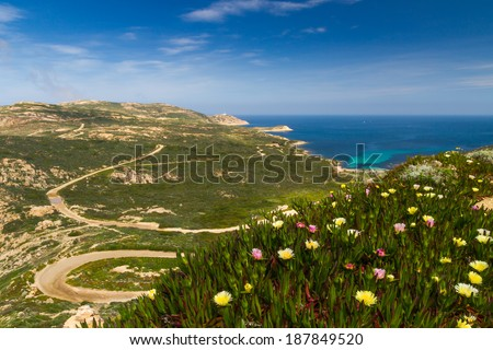 Flowers and maquis with Plage d'Alga and La Revellata lighthouse in the distance near Calvi in Corsica - stock photo