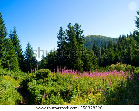 flowers and mountains in the background