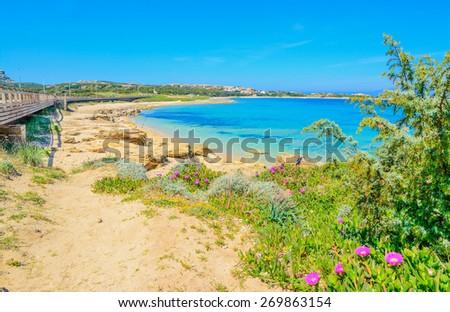 flowers and plants by Capo Testa shoreline, Sardinia - stock photo