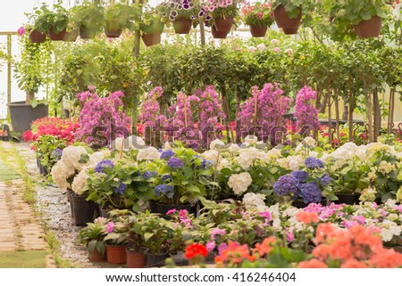 Flowers and plants in pots for sale in greenhouse