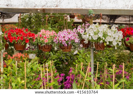 Flowers and plants with pots in the greenhouse
