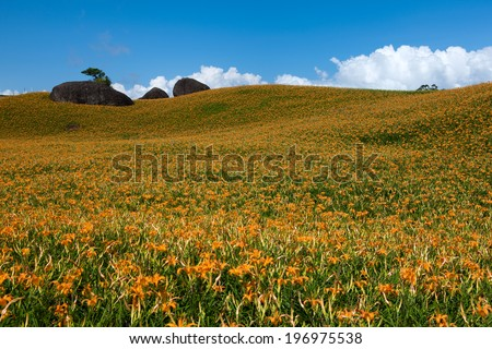 Flowers and rocks situated on several vast hills. - stock photo