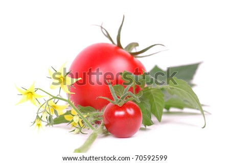 Flowers and tomatoes isolated - stock photo
