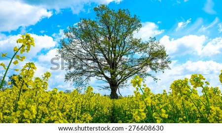 Flowers and tree - stock photo