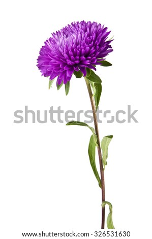 flowers are isolated on a white background