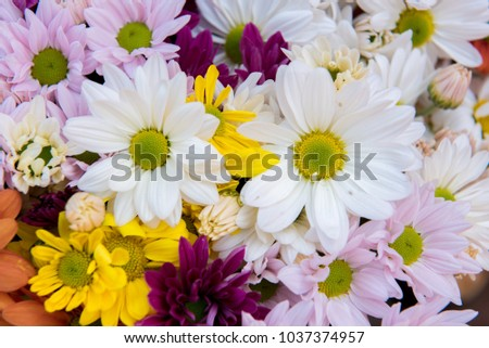 flowers arranged as a colorful natural background