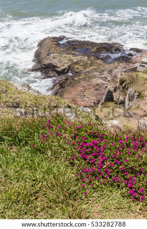 Flowers at Guarita beach in a sunny day