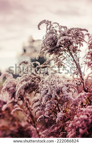 Flowers at sunrise/Vintage photo of wild flower in sunset/ landscape background - stock photo