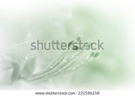 flowers background colourful made with color filters abstract - stock photo