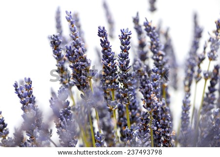 Flowers background. dry lavender on a white background - stock photo