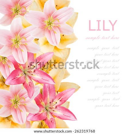 Flowers background isolated on white with sample text. Lily flowers - stock photo