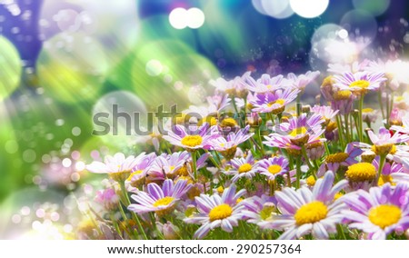 Flowers background.Spring flowers with sunshine  - stock photo