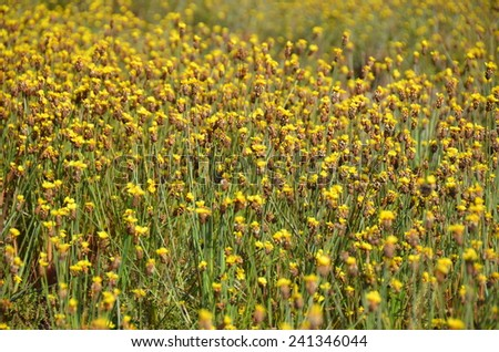 flowers background wallpaper green yellow texture green blossom nature - stock photo